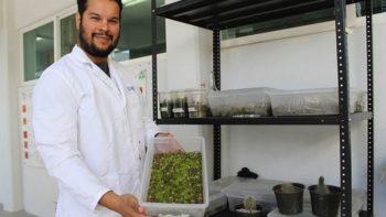 Investigador rescata cactáceas en peligro de extinción en México