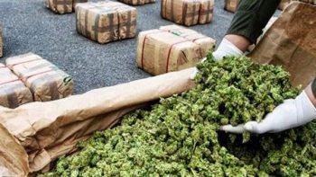 Procuraduría asegura una tonelada de marihuana en El Mante