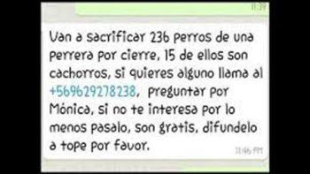 Falso, mensaje en WhatsApp sobre sacrificio de perros: PGJ
