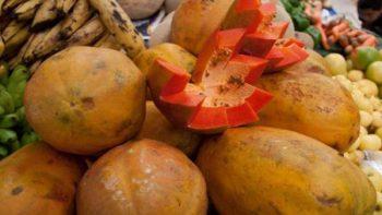 Prematuro, señalar a papaya mexicana como fuente de salmonella