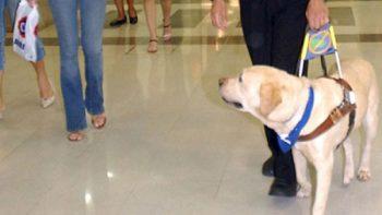 Metro de CDMX anuncia instalación de espacio de tránsito seguro para perros