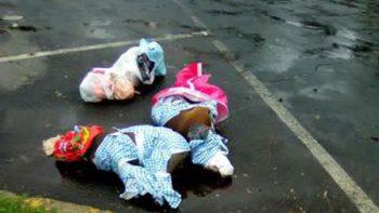 Difunden imágenes de perros pitbull muertos y torturados en Coyoacán