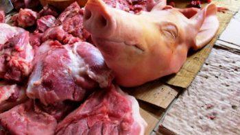 La carne de cerdo es segura y nutritiva, afirma académica de la UNAM