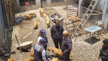 Clausuran criadero con más de 30 perros en Iztapalapa