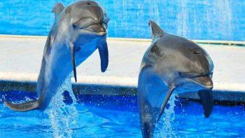 ¿Cuántos delfinarios hay en México?