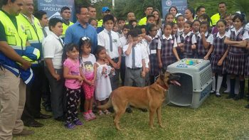 Misión Cumplida: 'Maya' regresa a casa tras rescates en CDMX