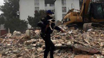 Rescatan a perrita entre escombros en Coyoacán