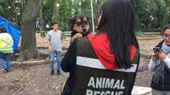 Buscan por Twitter a mascotas extraviadas por el sismo