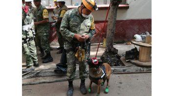 Binomios caninos con la esperanza de encontrar personas con vida