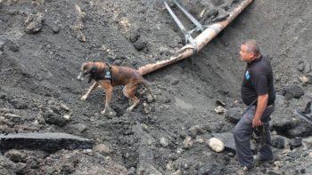 Buscan con perros entrenados restos de Emily, quien cayó en socavón