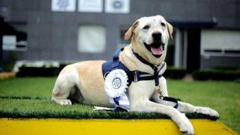 Oficial canino 'René' deja PF por tumor irreversible