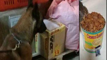 Perro policía halla droga en lata de chongos zamoranos