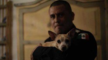 'Camila' la perrita chihuahua, se reunió con el policía federal que la rescató