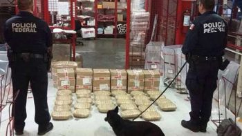Agentes caninos decomisan 34 kg de marihuana en Veracruz