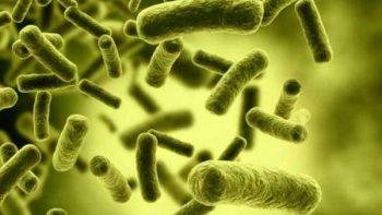 Científicos descubren que los microbios son 'amigos'