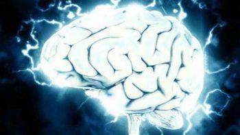 Conectan un cerebro humano a internet en tiempo real