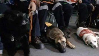 Asamblea Legislativa reconoce a perros rescatistas por sismo