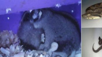 Profepa asegura 7 ejemplares de fauna silvestre en central de autobu