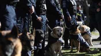 Jubilan a 14 oficiales caninos de la Policía Federal