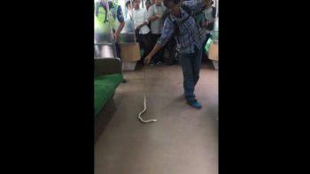 Joven se convierte en el héroe del tren al sacar una serpiente de un vagón (VIDEO)