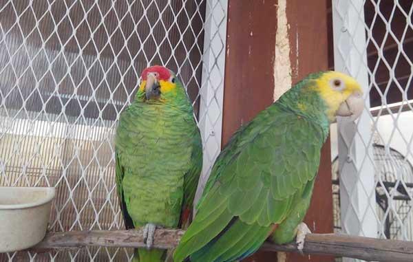 Asegura PROFEPA ocho ejemplares de vida silvestre en Monterrey