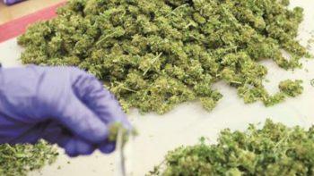 Venta de productos con cannabis, en 2018