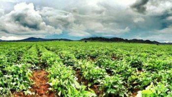 Beneficiará al campo bajas temperaturas: Sagarpa