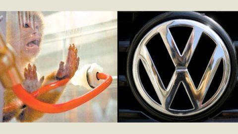 ¿Cómo eran las pruebas que hacía Volkswagen con monos?