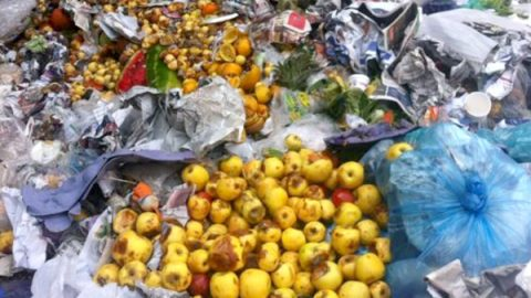México tira 20 millones de toneladas de alimentos: BM