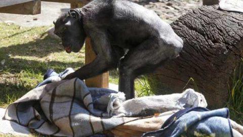 Dan cobijas a animales de zoológico ante bajas temperaturas
