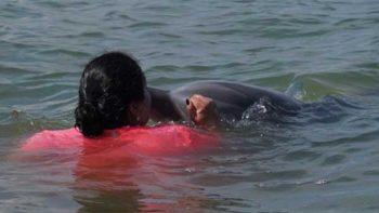 Lucero, la delfín que se quedó en la laguna