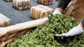Marihuana es ilegal por daños a la salud, no por violencia: Segob