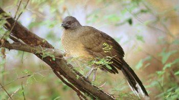 En peligro el 'Paraíso de los pájaros' por muro fronterizo