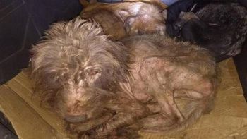 Santuario para perros en Nuevo León resultó ser un 'infierno' (VIDEO)