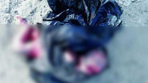 Perro descubre cadáver de recién nacido en una bolsa