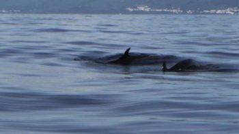 Profepa rescata dos orcas en aguas del litoral yucateco