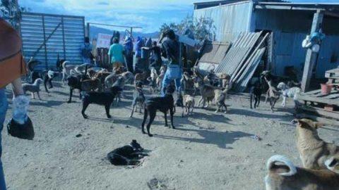 Denuncian presunto hacinamiento de 200 perros en refugio de Oaxaca