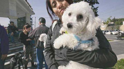 SCT emite norma para el transporte de mascotas en avión