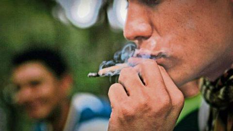 Unión de Padres de Familia pide a AMLO no legalizar la marihuana