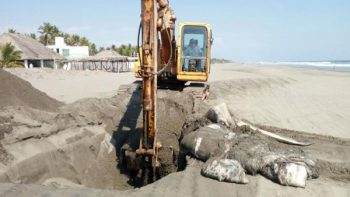 Hallan ballena muerta en playa Arista, Chiapas