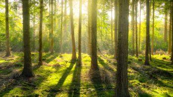 Plantarán Estado y Fondo de Agua un millón de árboles