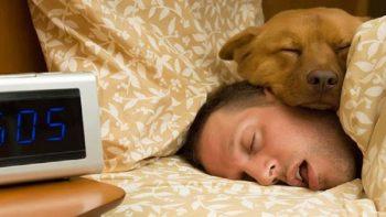 ¿Duermes con tu perro?