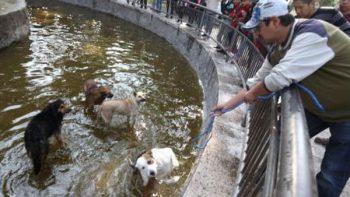 Jauría devora varios patos de la Alameda de Toluca