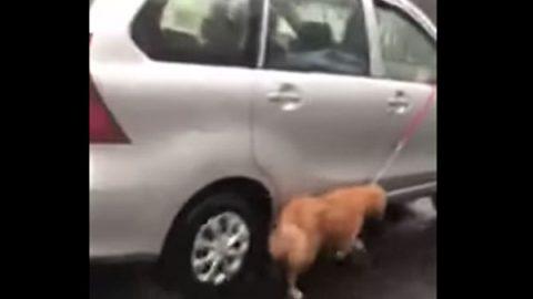 Denuncian maltrato a un perro en Puebla