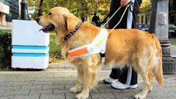 Perros guía tendrán acceso libre a lugares públicos en la CDMX