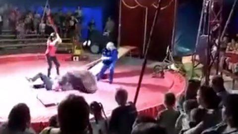 Oso ataca a entrenador durante espectáculo de circo (VIDEO)