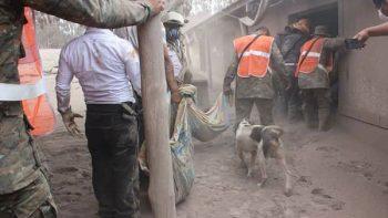 Perro guía a rescatistas en Guatemala tras erupción de volcán