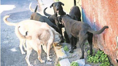 'Echan' los perros a empleados del INE durante capacitación electoral