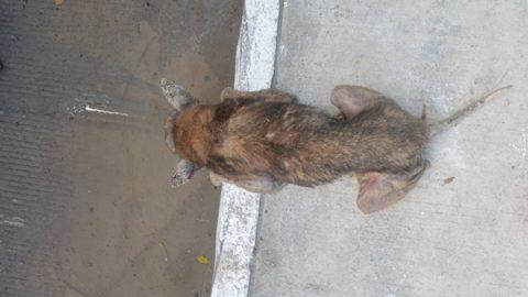 Considera Dirección de Salud necesaria atención a mascotas
