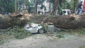 Mueren 4 personas en Naucalpan; los aplasta un árbol